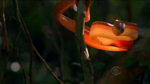 glowing snake